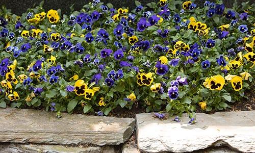 brachtendorf-blau-gelbe-blumen